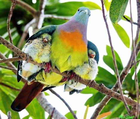 bird take